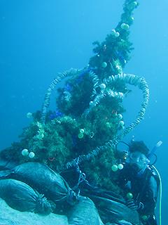 海中クリスマスツリーにて