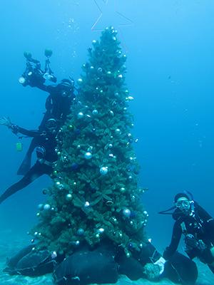 IOPクリスマスツリー